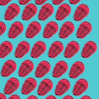 trilobite archaean era trilobite wallpaper